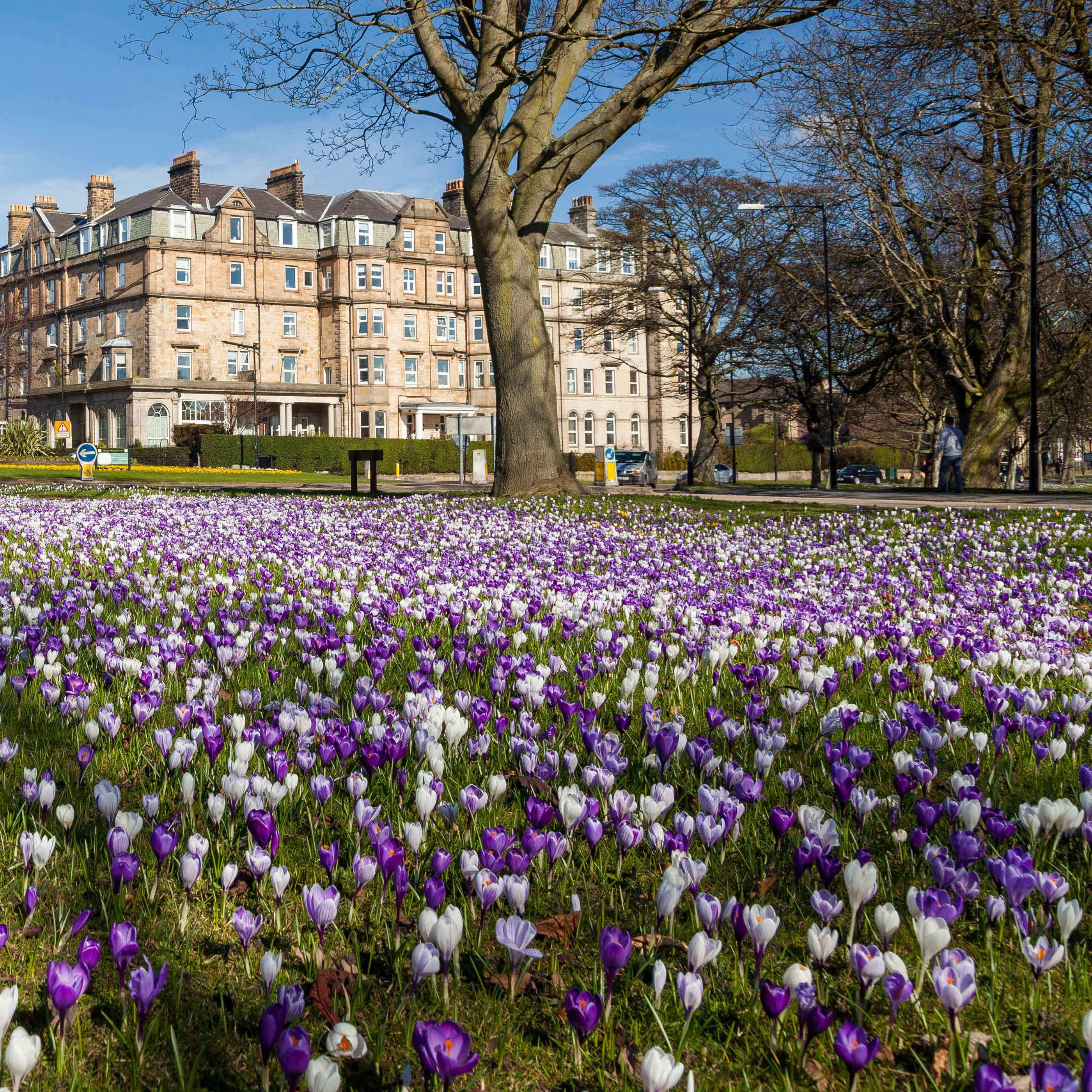 Stray Talking: Spring into Harrogate in style.